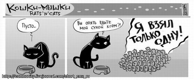 Дружба кота і собаки. фото