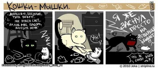 Ніжні стосунки кота і собаки. фото