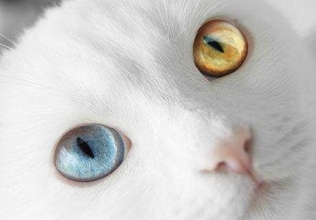 Дружба тварин: кошеня і щеня. фото