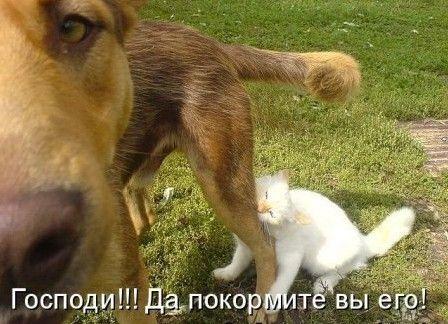 собаки і кішки фото з написами