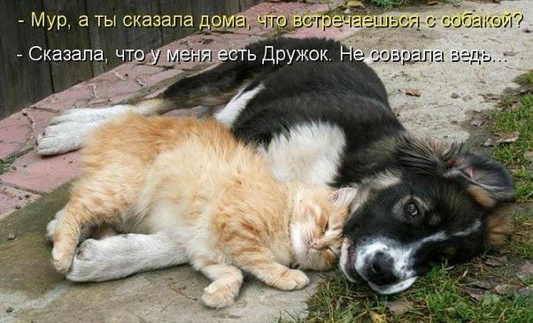 Забавні фото кішок і собак