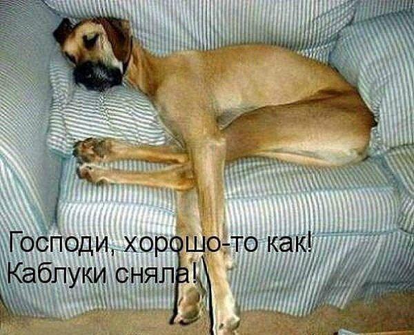 кумедні картинки собак з написами