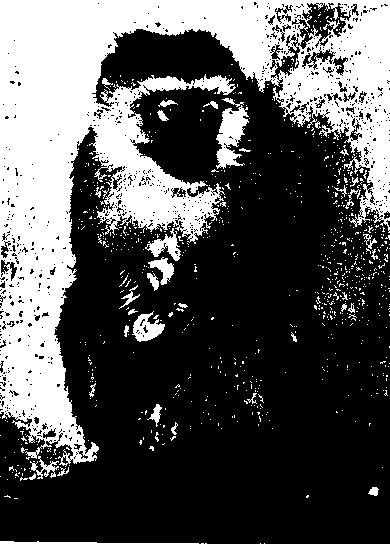Фото 1 Галапагоських горлиця (голуб)