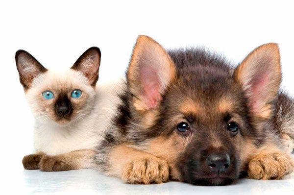 Кіт і собака на відпочинку