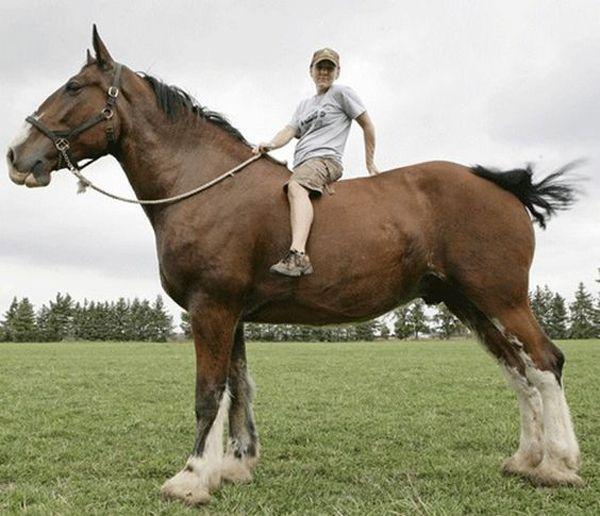 Людина сидить на величезному коні