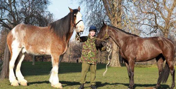 Жеребець Діггер і кінь звичайного розміру