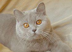 Очі кішки.
