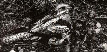 Фото 1 гніздування і турбота про потомство у птахів