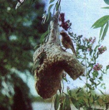 Фото 3 гніздування і турбота про потомство у птахів