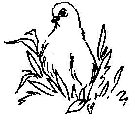 Фото 1 Кременчуцькі (голуби)