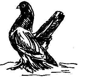 Ростовські кольорові (голуби)