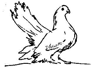 Статні чубаті (голуби)