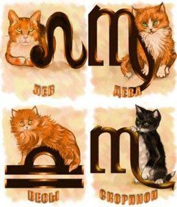 котячий гороскоп
