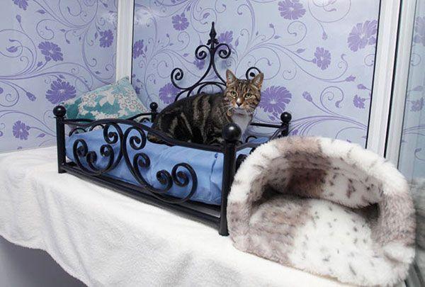 Готель для кота