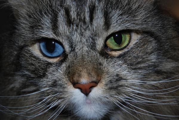 Ніжна дружба кота і собаки. фото