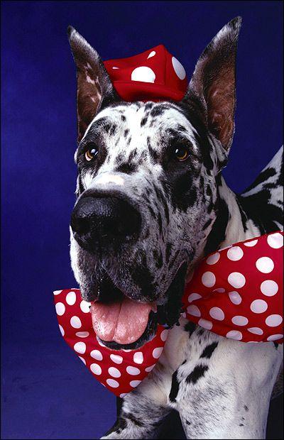 Груммінг собак