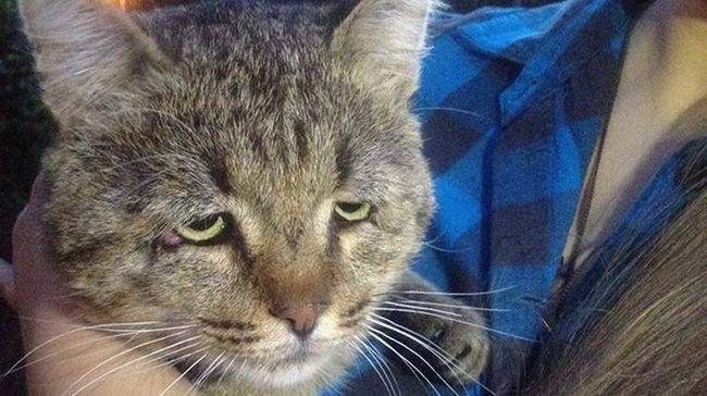 Сумний кіт по кличці Мікеш.