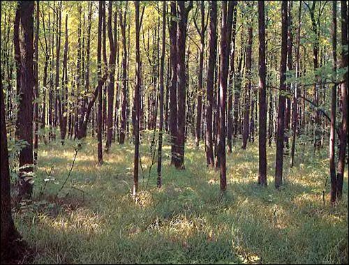Широколистяні ліси євразії