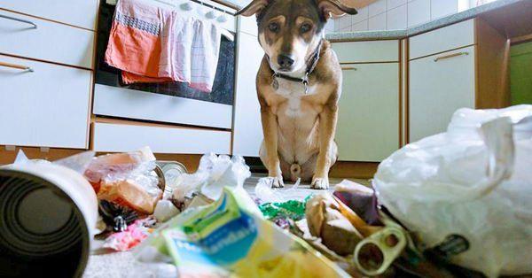 Собака на кухні і розкидане сміття