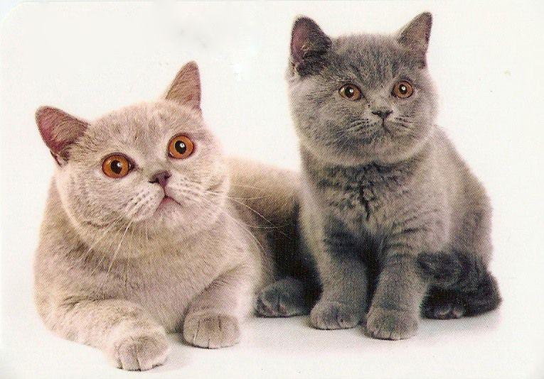 характер кішок