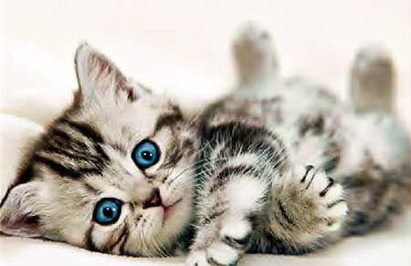 Хочу взяти кошеня.