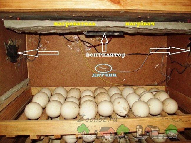 Приклад саморобного інкубатора фото