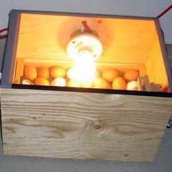 Інкубація яєць в саморобному агрегаті