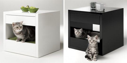Ідеї для кошенят