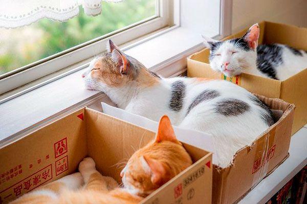Гра в хованки чи боротьба зі стресом: чому коти люблять картонні коробки