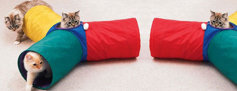 Іграшка для кошенят