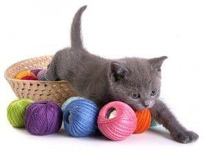 Іграшки для кошенят своїми руками