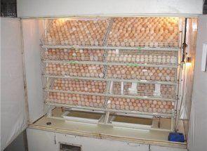 Інкубатор - друге життя старого холодильника