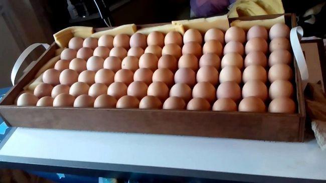 Закладка яєць в Бліц-72