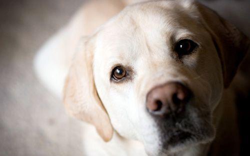 Інсульт або крововилив в мозок у собаки