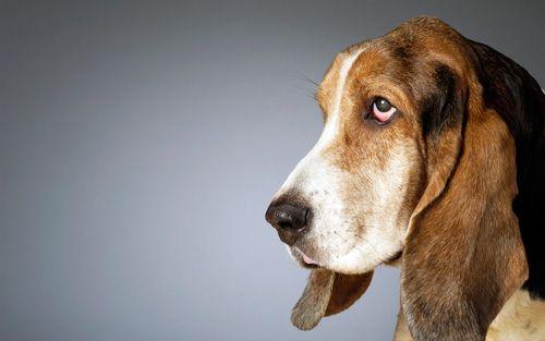 лікування інсульту у собаки