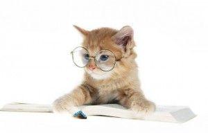 Інтелект кішки