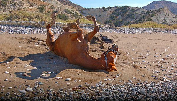 Кінь качається в піску