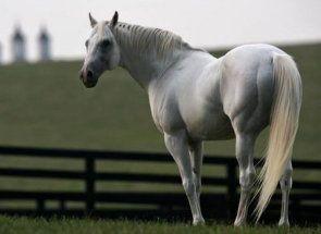 З чого складається кінь: розбираємо анатомію