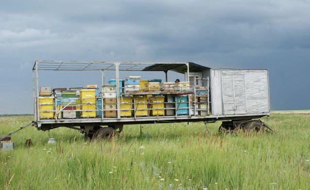 Бджільництво південного уралу і його особливості