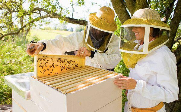Вивчаємо ази бджільництва з нуля!