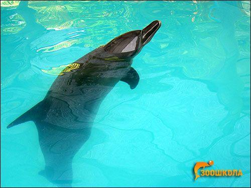 Загін китоподібних (cetacea)