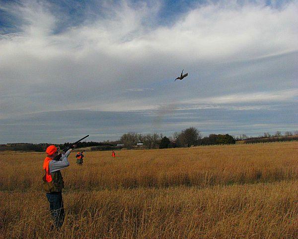 Осіннє полювання на фазанів