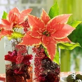 Екзотичні рослини у вас вдома: акністус південний, барбадоська вишня, кленодендрум уругвайський, гревіллея, істод міртолістная