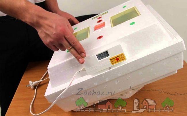 Електронна квочка - бюджетний інкубатор
