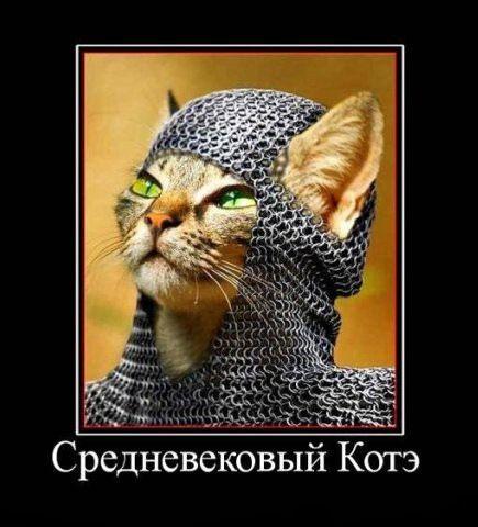 Знамениті коти
