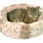 Енромаг для кішок