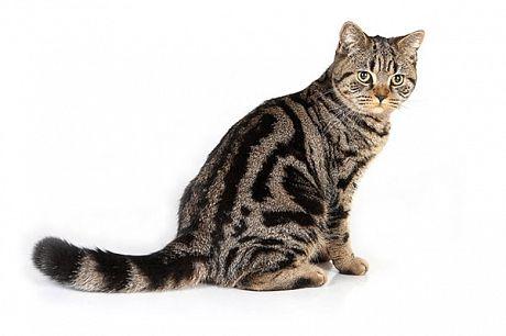 Це цікаво: котячий хвіст