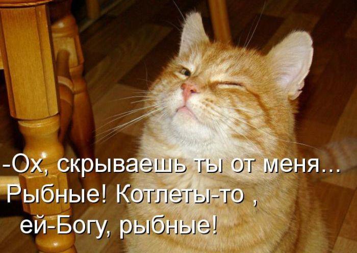 Найсмішніші кішки, гумор про кішок