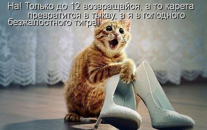 Найсмішніші коти