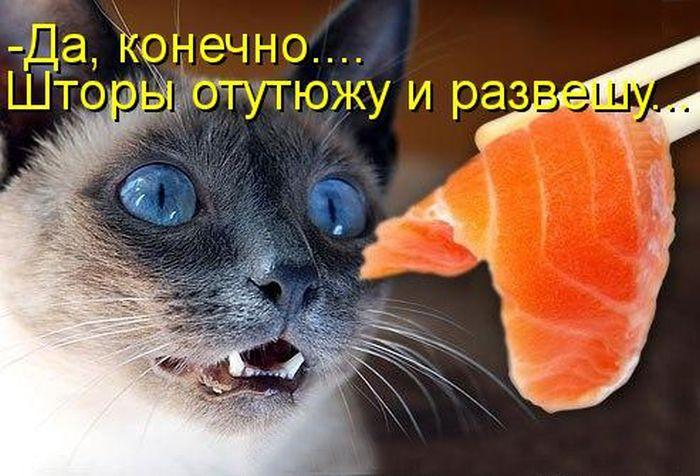 Найсмішніші кішки